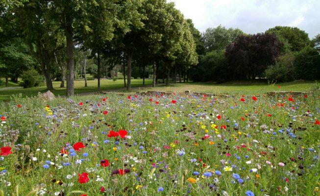 Wild Flowers in Field